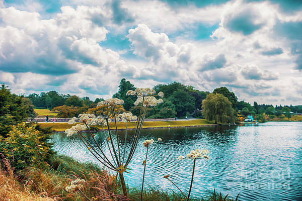 Photograph - park  in Kent,  England by Ariadna De Raadt
