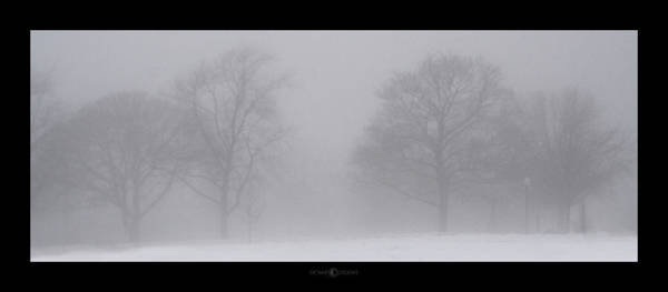 Photograph - Park In Winter Fog by Tim Nyberg