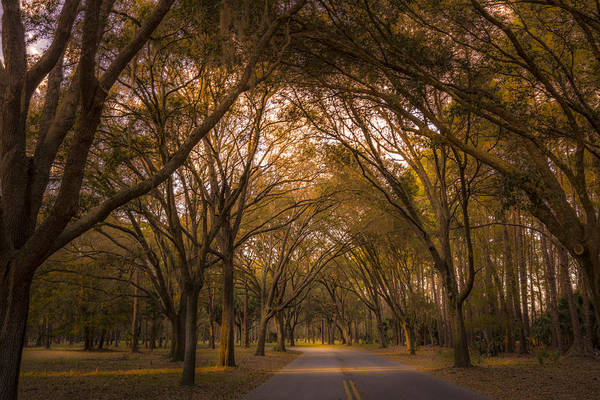Cypress Knees Photograph - Park Overhang by Marvin Spates