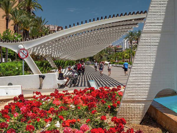 Wall Art - Photograph - Park, Paseo Vistalegre, Torrevieja by Mike Walker