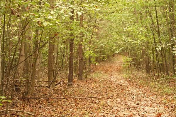 Photograph - Park Path by Buddy Scott