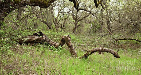 Photograph - Park Serpent by Carol Lynn Coronios