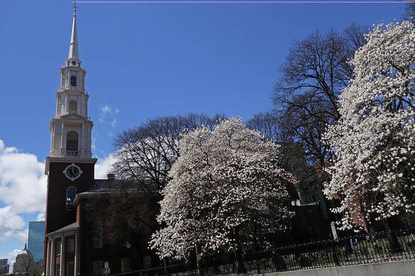 Photograph - Park Street Church Spring Trees Boston Ma Tremont St by Toby McGuire