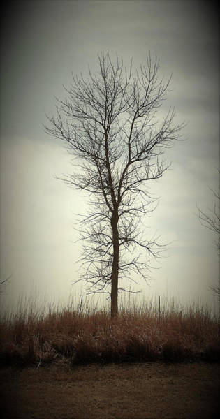 Wall Art - Photograph - Park Tree by Toni Grote