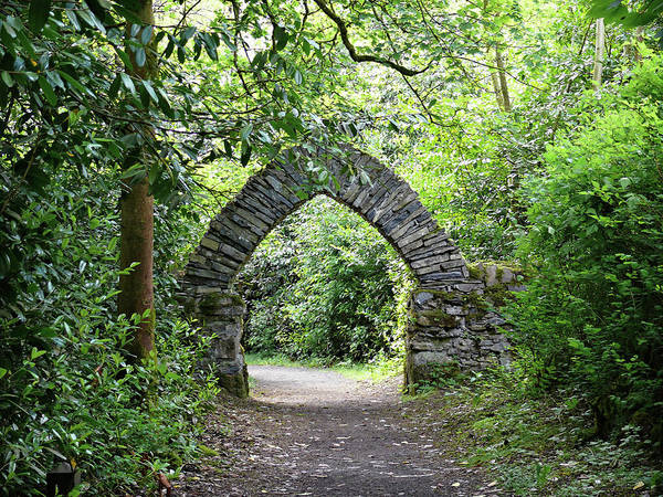Photograph - Parkanaur Forest Archway by Colin Clarke