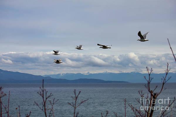 Photograph - Parksville Beach Gulls by Donna L Munro