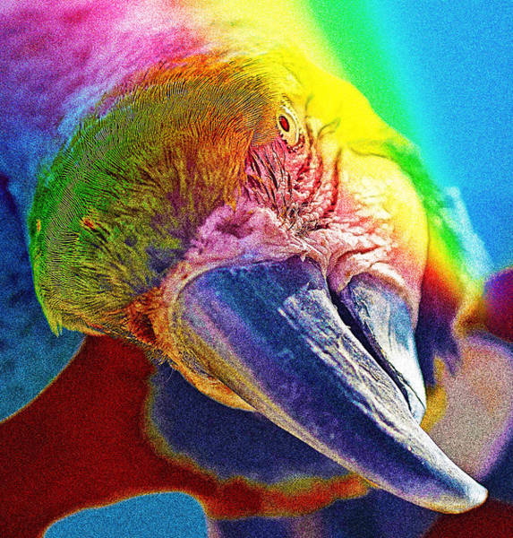 Photograph - Parrot by Artistic Panda