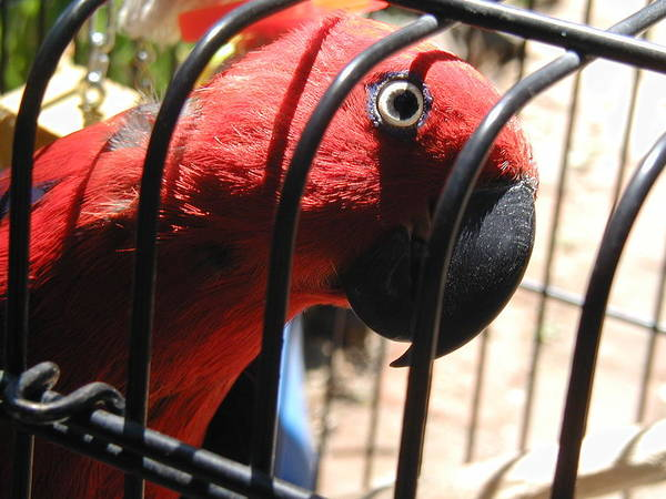 Wall Art - Photograph - Parrot Cage by Mark Stevenson