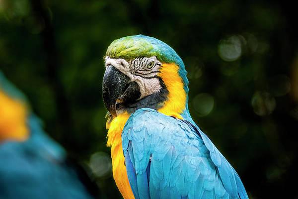 Photograph - Parrot by Daniel Murphy