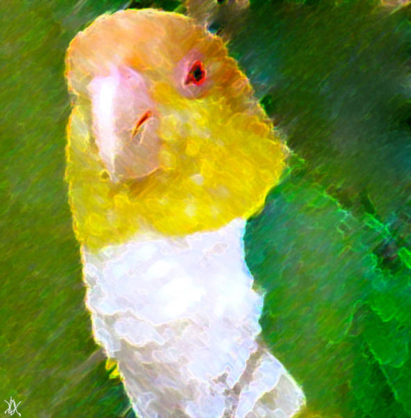 Wall Art - Painting - Parrot Grace by Debra     Vatalaro