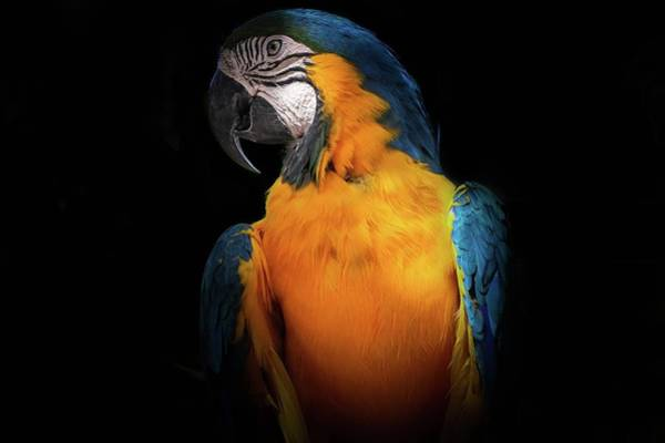 Wall Art - Photograph - Parrot by Happy Home Artistry