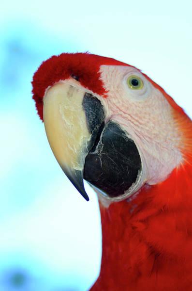 Wall Art - Photograph - Parrot Head, But Not Necessarily A Fan  by Richard Henne