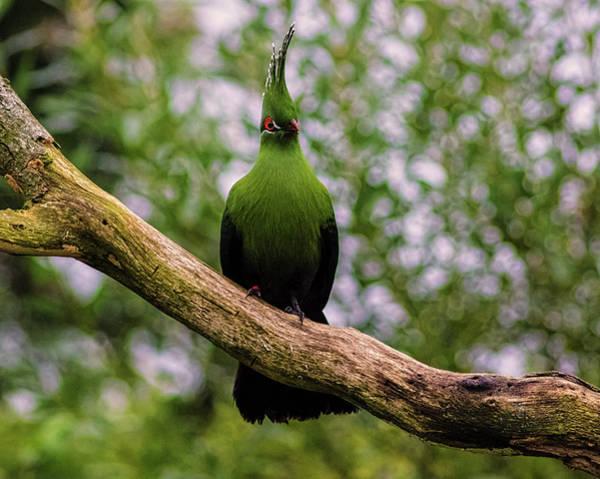 Toucan Photograph - Parrot by Martin Newman