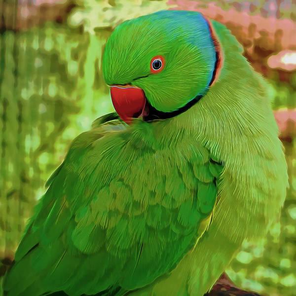 Mixed Media - Parrot by Pamela Walton