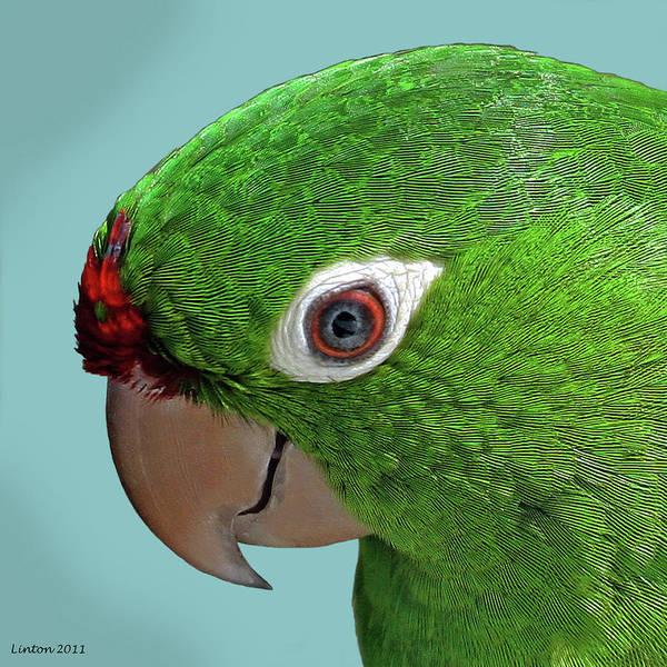 Photograph - Parrot Portrait by Larry Linton