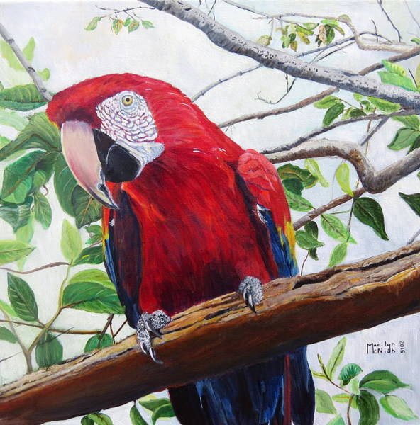 Painting - Parrot Portrait by Marilyn  McNish