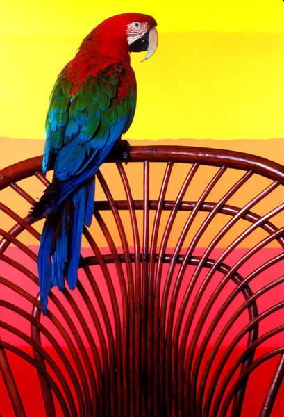 Tropical Bird Photograph - Parrot Sitting On Chair by Garry Gay