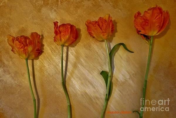Wall Art - Photograph - Parrot Tulip Love Line by Marsha Heiken