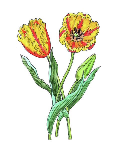 Painting - Parrot Tulips Botanical Watercolor  by Irina Sztukowski
