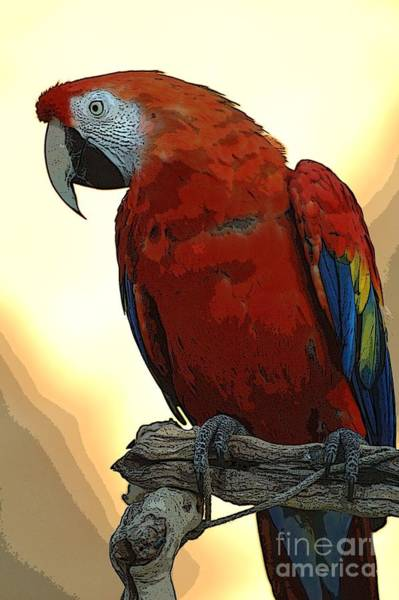 Photograph - Parrot Watching by Norman Andrus