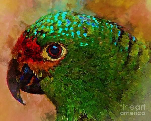 Photograph - Parrote by John Kolenberg
