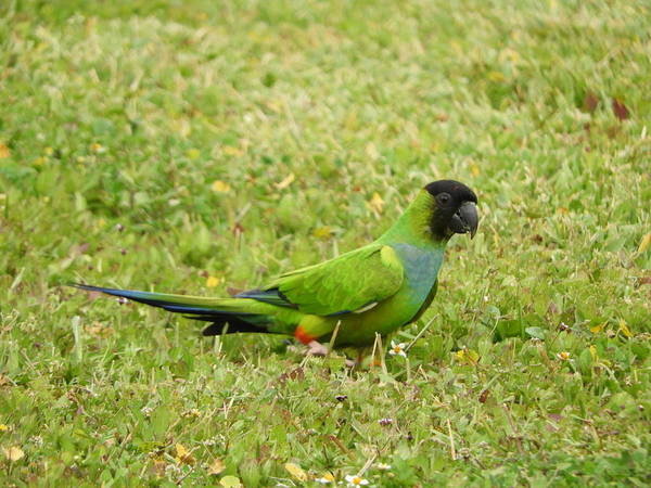 Wall Art - Photograph - Parroting Green by Red Cross
