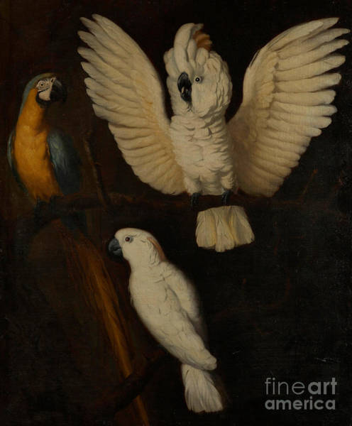 Spread Painting - Parrots by Dutch School