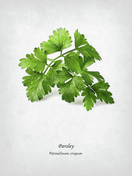 Parsley Photograph - Parsley by Mark Rogan
