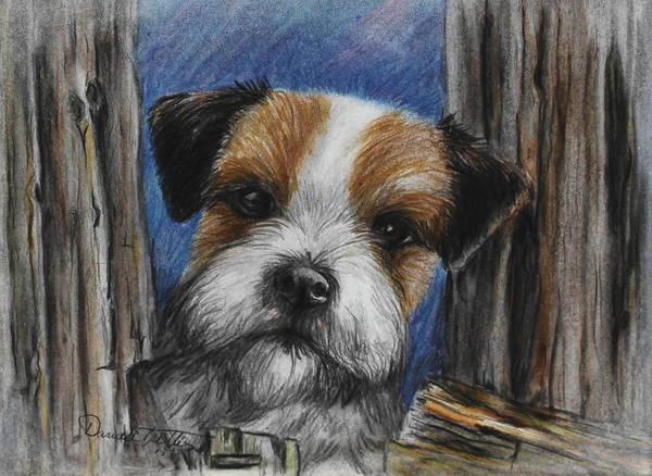 Chien Drawing - Parson Russel Terrier by Daniele Trottier