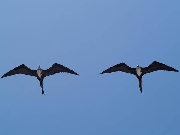 Partners In Flight Art Print by Richard Mansfield