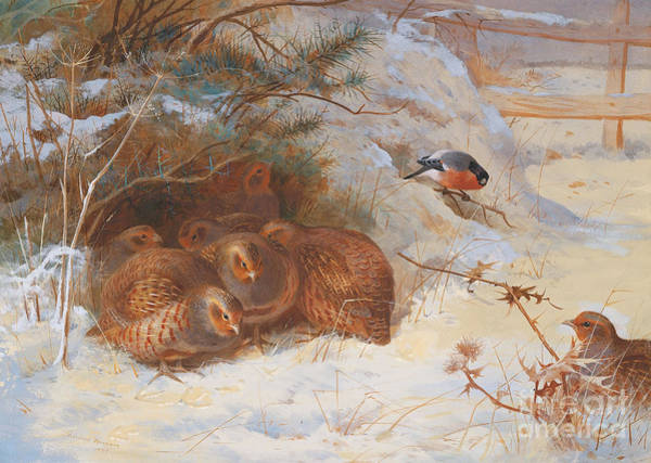 Wall Art - Painting - Partridge And A Bullfinch In The Snow  by Archibald Thorburn