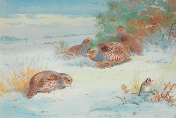 Wall Art - Painting - Partridge And A Goldfinch In A Winter Landscape by Archibald Thorburn
