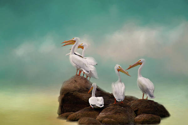 Wall Art - Photograph - Party On The Rocks by Lana Trussell