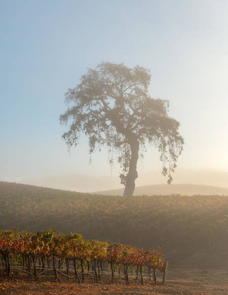 Wall Art - Photograph - Paso Robles Morning by Joseph Smith
