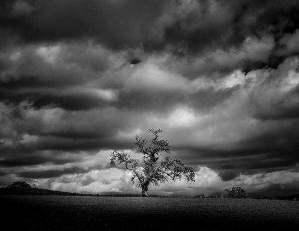 Wall Art - Photograph - Paso Robles Oak by Joseph Smith