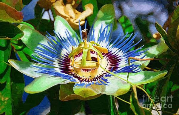 Photograph - Passion Flower by Donna Bentley