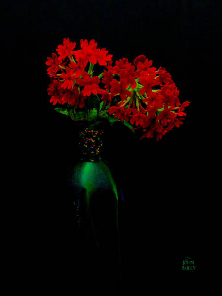 Passionate Photograph - Pure Delight by John Bailey