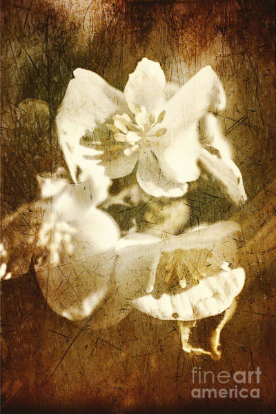 Photograph - Past Life Flowers by Jorgo Photography - Wall Art Gallery