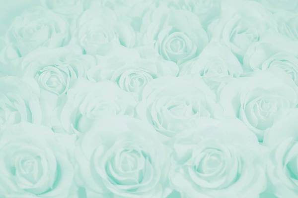 Wall Art - Photograph - Pastel Aqua Roses by Lucid Mood