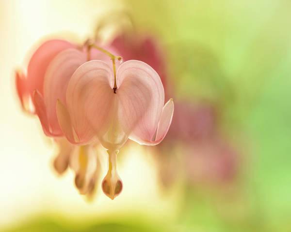 Wall Art - Photograph - Pastel Heart by Oscar Gutierrez