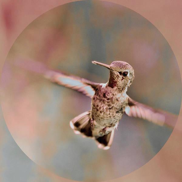 Photograph - Pastel Hummer by Susan Maxwell Schmidt