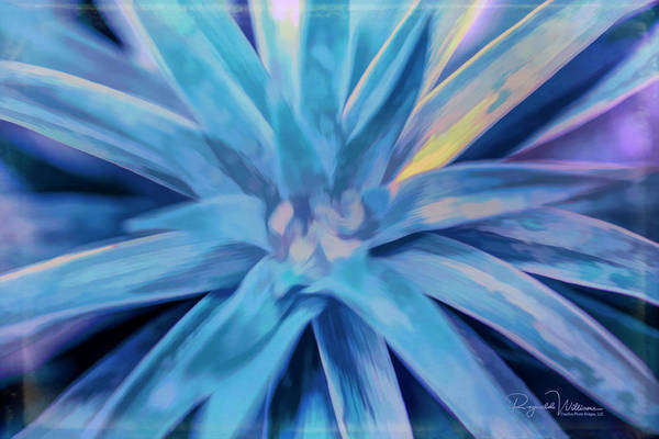 Photograph - Pastel Lily Plant Leaves by Reynaldo Williams