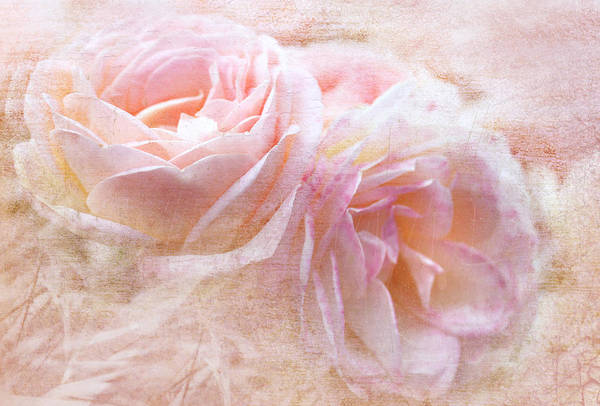 Wall Art - Digital Art - Pastel Pink by Margaret Hormann Bfa