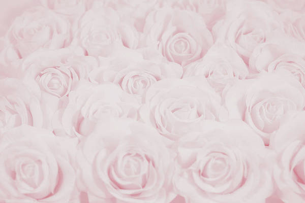 Wedding Flower Photograph - Pastel Pink Roses by Lucid Mood