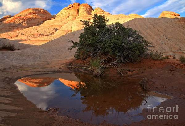 Photograph - Pastel Pool Reflections by Adam Jewell