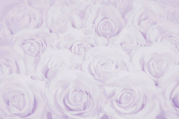 Wedding Flower Photograph - Pastel Purple Roses by Lucid Mood