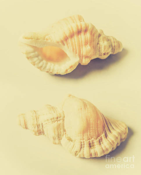 Indoor Photograph - Pastel Seashell Fine Art by Jorgo Photography - Wall Art Gallery