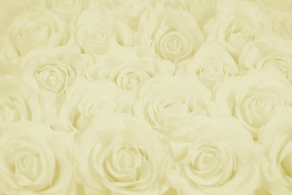 Wedding Flower Photograph - Pastel Yellow Roses by Lucid Mood