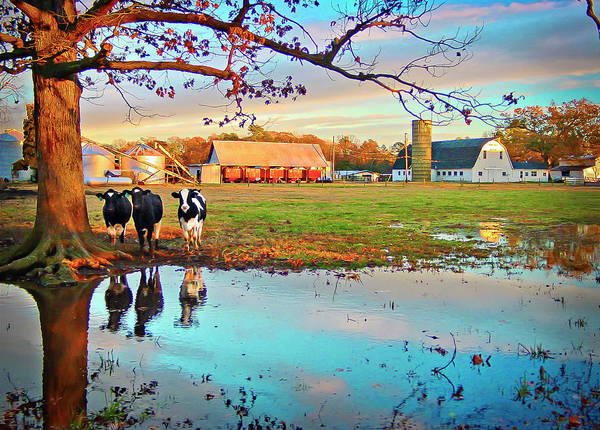 Photograph - Pasture At Bacon's Castle by Williams-Cairns Photography LLC