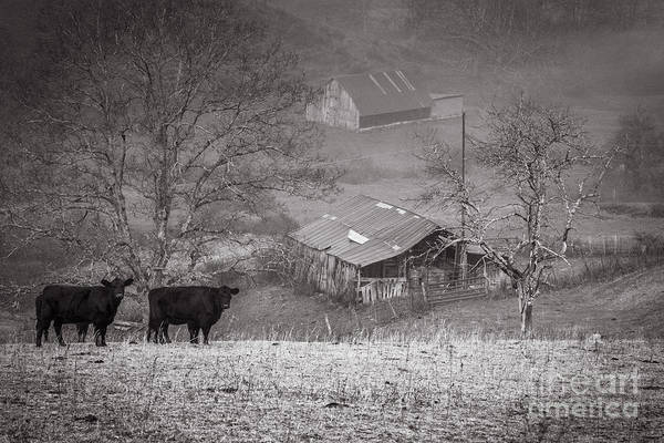 Photograph - Pasture Field And Barns by Thomas R Fletcher